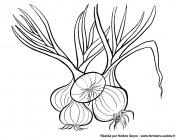 Des oignons doux