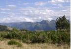 A l'extrême sud du plateau de Sault au mois d'août